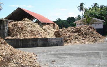 bagasse waste