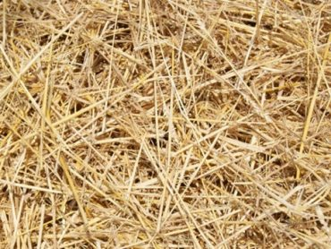 wheat straw for making biomass pellet